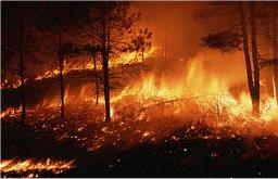 Au coeur d'un incendie de forêt